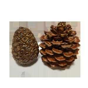 Piña Biopiñón